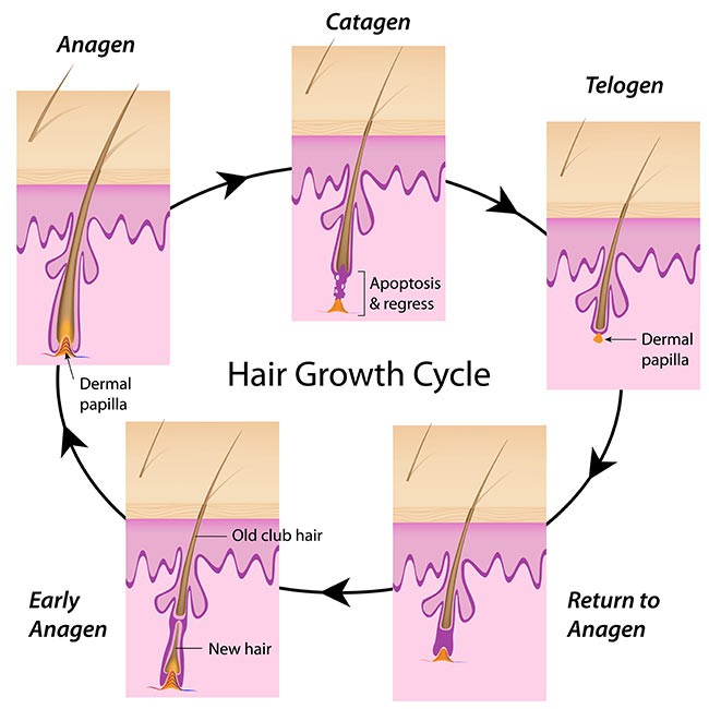 hair restoration training 2