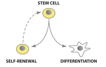 Stem Cells and Regenerative therapies Training